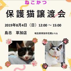 8/4(日)島忠草加店 保護猫譲渡会