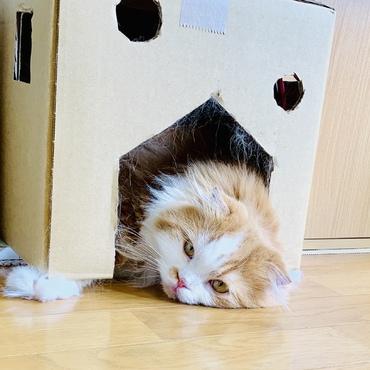退屈です。眠いです。おかあしゃん、遊ぶ?