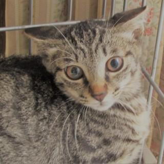 殺処分から救った仔猫ちゃん姉弟達。3匹。3か月