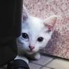 綺麗な瞳のひらり1ヶ月半、人馴れOK、好奇心旺盛