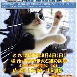 もりやま犬と猫の病院 保護猫譲渡会