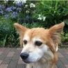 女王気質のマダム犬 サムネイル3