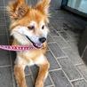 女王気質のマダム犬 サムネイル4