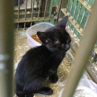 小さな黒子猫。譲渡されました。動画あり