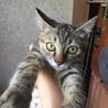下半身麻痺の子猫の里親を募集しています!