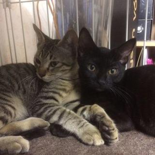 キジトラ&黒猫の仲良し兄妹コンビ!