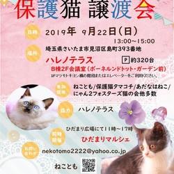 9/22 ハレノテラス 保護猫譲渡会&ひだまりマルシェ