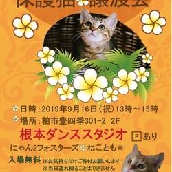 9/16(祝)猫カフェ風保護猫譲渡会 サムネイル1