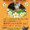 9/16(祝)猫カフェ風保護猫譲渡会