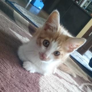 茶白の子猫です。