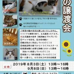 8/3(土)ねこだいら保護猫譲渡会♪