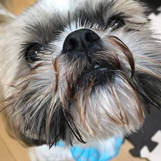 <保護犬投稿>優しい風ちゃんをよろしくお願いします