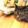 里親決定!味わい系なキジトラさん サムネイル2