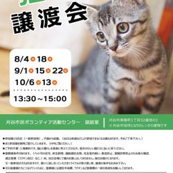 刈谷市で開催!!猫の譲渡会 サムネイル1