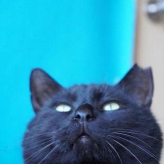 でっぷり大きなお尻がプリティ黒猫オス