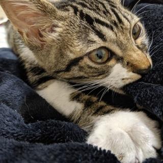 甘えん坊の仔猫