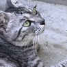 綺麗なママ猫。人馴れしてます。抱っこOK‼️