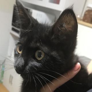 生後3カ月くらいの黒猫ちゃんです