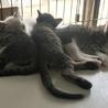 元気いっぱいベタ慣れ猫さん4匹