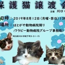 8/12(日)動物病院での ほごねこ譲渡会