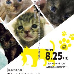 写真パネル展 赤ちゃんネコのすくいかた
