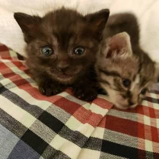 黒子猫のご紹介
