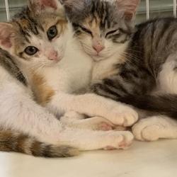 藤井寺市 保護猫譲渡会 サムネイル2