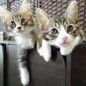 2匹兄弟でのお迎えを希望しております。