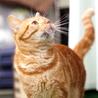 譲渡対象猫の紹介です。