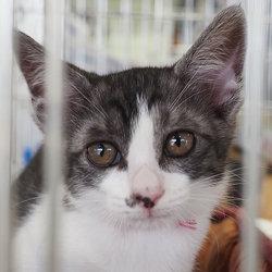 子猫だけの譲渡会26匹参加予定・愛知県みよし市 サムネイル1