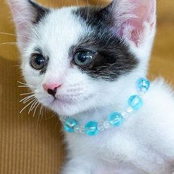 子猫だけの譲渡会26匹参加予定・愛知県みよし市 サムネイル2