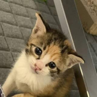 三毛子猫の紹介