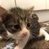 完全室内飼い 子猫たち サムネイル3