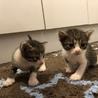 完全室内飼い 子猫たち サムネイル4