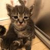 完全室内飼い 子猫たち サムネイル5