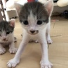 完全室内飼い 子猫たち サムネイル6