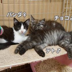 保護猫終了のお知らせ〜ルーシュの場合