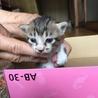 子猫4匹産まれました!