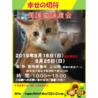 2019年8月18日の25日保護猫譲渡会
