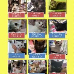 2019年8月18日の25日保護猫譲渡会 サムネイル2
