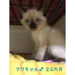 2019年8月18日の25日保護猫譲渡会 サムネイル3