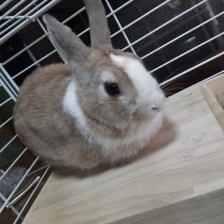ウサギ好きの方 里親募集