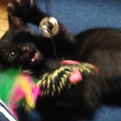 恐怖!ネズミのおもちゃ
