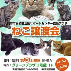 8月17日(土)保護猫譲渡会@高槻のお知らせ