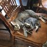 可愛い子猫の里親様を探しています サムネイル4