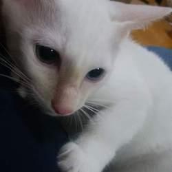 かわいい仔猫、大人猫も 猫の譲渡会 in 名古屋市緑区徳重 サムネイル1