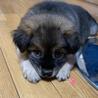 保健所からレスキューした子犬♀ サムネイル3