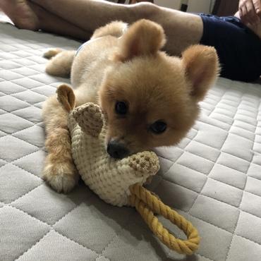 新しいおもちゃ(^∇^)
