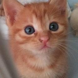 寒川町役場、屋内での保護猫譲渡会! サムネイル1