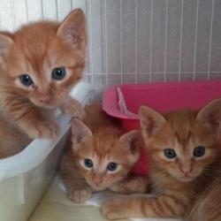 寒川町役場、屋内での保護猫譲渡会! サムネイル2